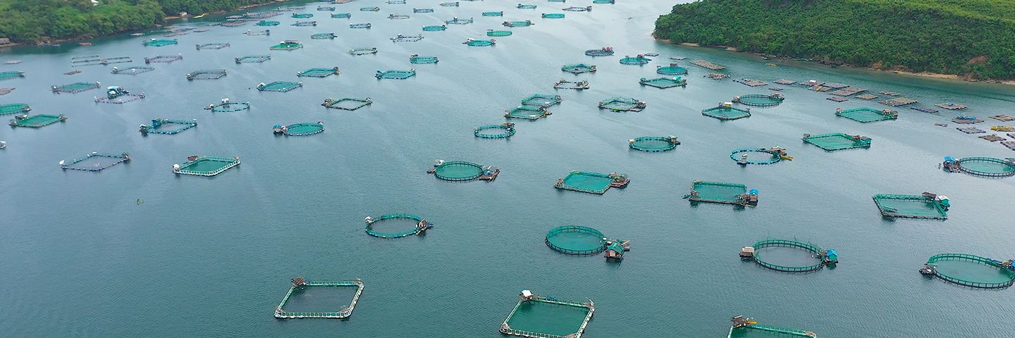 What mitigating the pandemic can teach us about aquaculture sustainability