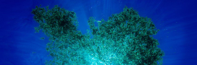 Artificial nutrients, a silent problem of our oceans