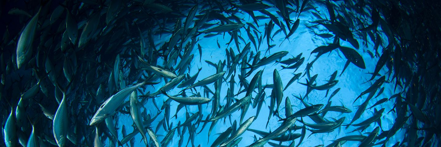 World Ocean Day: Accelerating a Sustainable Ocean Economy