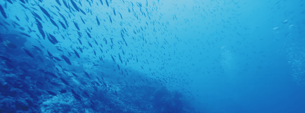 How business can drive positive ecological change in the ocean