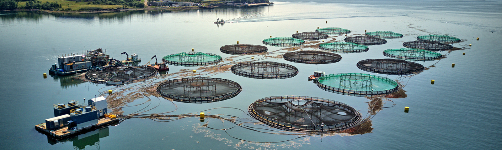Can the ocean fix our broken food systems?