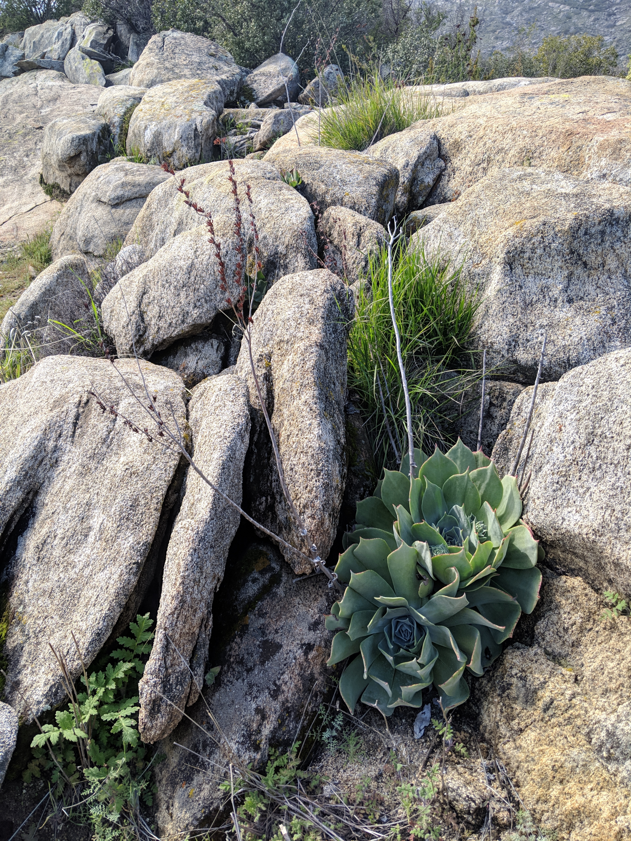 Clairement un climat désertique • Clearly a desert climate