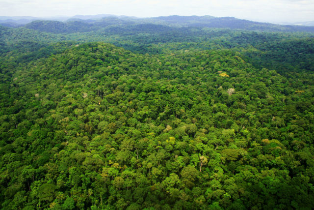 Tropical forests failed to draw down greenhouse emissions