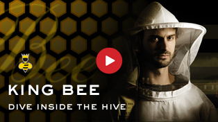 Dive Inside The Worker Bee