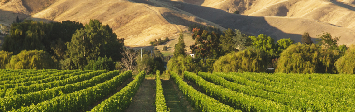 Dillons Point Vineyard image