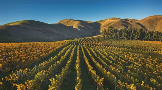 Clayvin Vineyard image