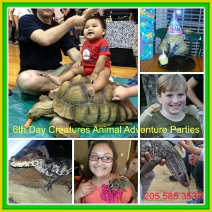 6th Day Creatures Animal Adventures - Animal Entertainment / Petting Zoo in Springville, Alabama