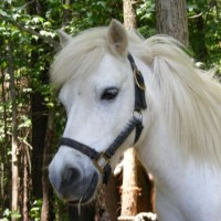 A Pony To Go - Pony Party / Children's Party Entertainment in Sanford, North Carolina