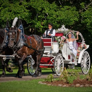 Abraham's Carriage Service - Horse Drawn Carriage in Mesick, Michigan