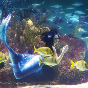 Blue Mermaid Designs