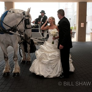 Horse and Carriage Rentals, LLC - Horse Drawn Carriage in Neshanic Station, New Jersey