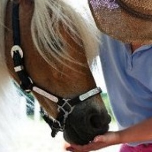 Amos the Wonder Horse - Pony Party in St Petersburg, Florida