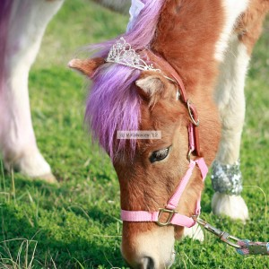 Lilly's Ponies - Pony Party / Photographer in Holly Springs, North Carolina