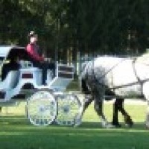 Andrusz Carriage Service - Horse Drawn Carriage / Petting Zoo in Akron, New York