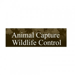 Animal Capture Wildlife Control - Caricaturist in Los Angeles, California