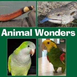 Animal Wonders, LLC - Reptile Show in Kansas City, Missouri