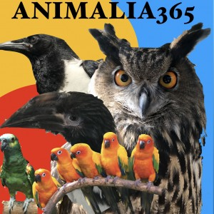 Animalia365 - Animal Entertainment / Environmentalist in Toledo, Ohio