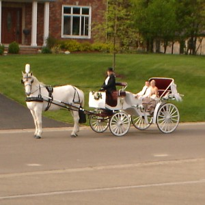 Ann Arbor Carriage - Horse Drawn Carriage in Whitmore Lake, Michigan