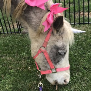 Apple Valley Pony Parties, LLC - Pony Party / Outdoor Party Entertainment in Jonesborough, Tennessee