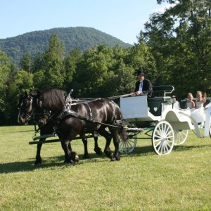 Back In Time - Horse-Drawn Carriages - Horse Drawn Carriage in Ball Ground, Georgia