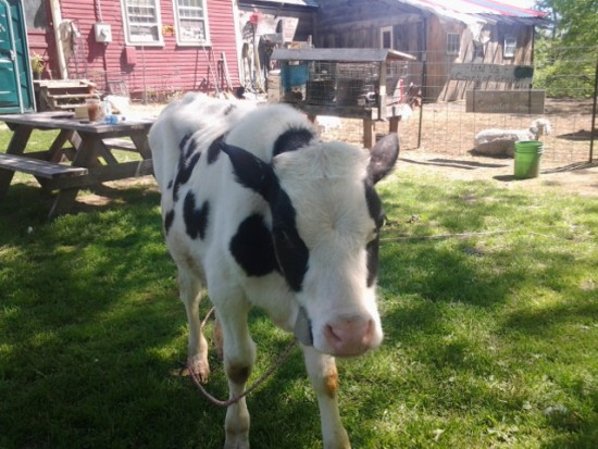 hire backwoods petting zoo in rumney new hampshire