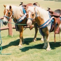 Becky's Pony Express - Pony Party / Petting Zoos for Parties in Diamond Bar, California