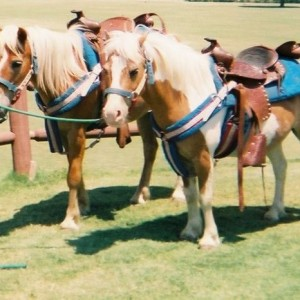 Becky's Pony Express - Pony Party / Children's Party Entertainment in Diamond Bar, California