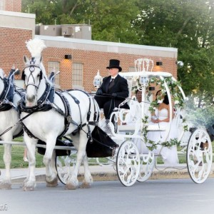 Bee Tree Trail - Horse Drawn Carriage in Bethlehem, Pennsylvania