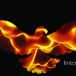 Birds of the Sun - Rock Band in New York City, New York