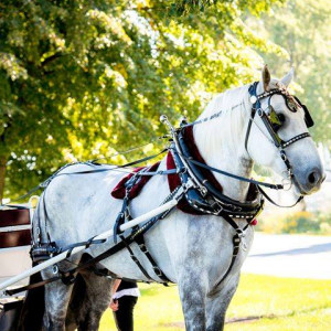 Black Tie Carriage Service - Horse Drawn Carriage / Holiday Party Entertainment in Racine, Wisconsin