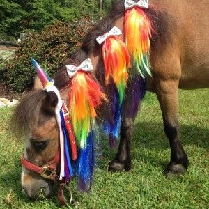 Blazingsaddles - Pony Party / Easter Bunny in North Dartmouth, Massachusetts