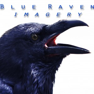 Blue Raven Imagery - Variety Entertainer in Orlando, Florida