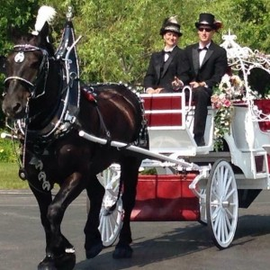 Buggy Down Carriage Co.llc - Chauffeur / Horse Drawn Carriage in Harrison, Michigan