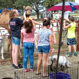 Carriages Camels and Critters LLC - Petting Zoo / Animal Entertainment in Cost, Texas