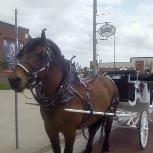Cameo Carriage Company - Horse Drawn Carriage / Prom Entertainment in Oklahoma City, Oklahoma