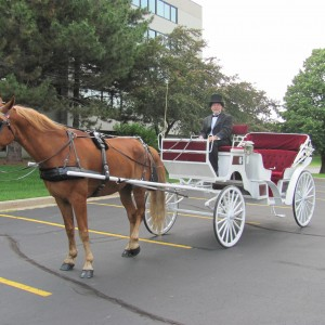 Candlelight Horse and Carriage LLC - Horse Drawn Carriage / Prom Entertainment in Yorkville, Illinois