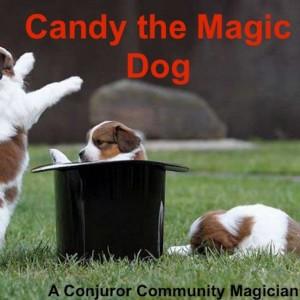 Candy The Magic Dog