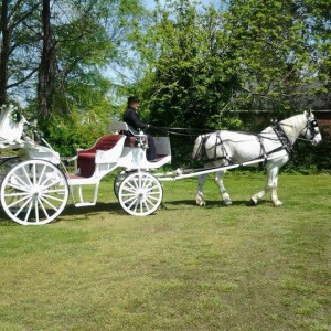 Carolina Carriages - Horse Drawn Carriage / Holiday Party Entertainment in Elizabeth City, North Carolina