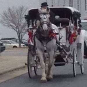 Carolina Carriages - Horse Drawn Carriage / Holiday Party Entertainment in Highland, Maryland