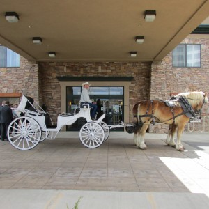 Carriages of Colorado - Horse Drawn Carriage / Pony Party in Commerce City, Colorado