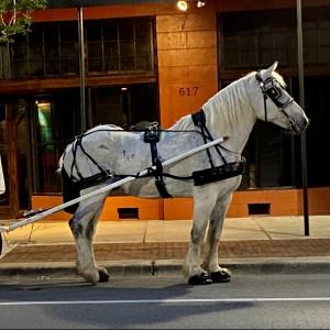 Carriages of Pensacola - Horse Drawn Carriage in Pensacola, Florida