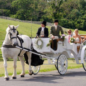 Carriages of the Capital - Horse Drawn Carriage / Pony Party in Frederick, Maryland