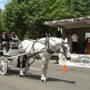 Catch-A-Breeze Farm Carriages - Horse Drawn Carriage in Califon, New Jersey