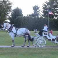 Cedar Spur Carriage Service - Horse Drawn Carriage in Iowa City, Iowa