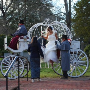 Chariots for Hire & Doves of Love - Horse Drawn Carriage / Wedding Services in Chesapeake, Virginia