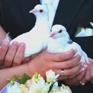 Charlotte White Dove Release - Dove Release / Wedding Services in Charlotte, North Carolina