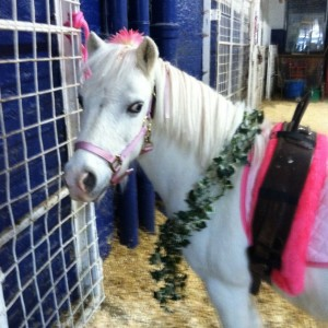 Chateau Stables - Pony Party in New York City, New York