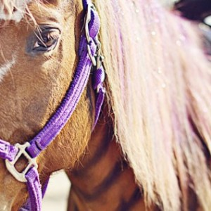 Choyce Party Ponies, Clown & Bounce - Pony Party / Petting Zoo in Port St Lucie, Florida