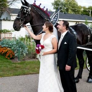 Cinderella Carriage LLC - Horse Drawn Carriage / Wedding Services in Cashton, Wisconsin