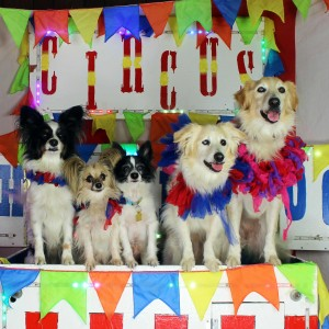 Circus Chickendog - Children's Party Entertainment in Austin, Texas